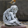 bird_image