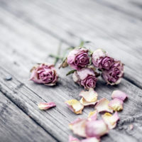 dryroses_image