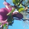 flower_filoli3