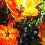 flowerphoto_filoli