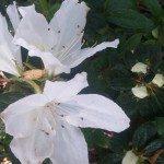flowerphoto_filoli2
