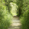 Forest Path. Blurred and thin focused on purpose by tilt-shift lens.