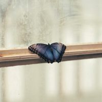 photo_butterfly